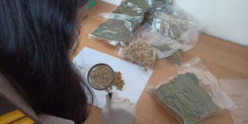 Petugas Balai Karantina Tanjungpinang saat memeriksa barang yang akam di Ekspor kel Luar Negeri,f : ist