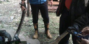 Petugas DPKP Kota Tanjungpinang, saat mengamankan ular sanca di rumah warga, f : ist